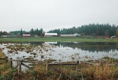 The fields of a farm in Oregon are flooded Stock Images