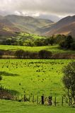 Fields and fences, Lake District, Cumbria Royalty Free Stock Images