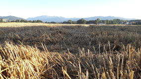 Fields with fiew Stock Photography