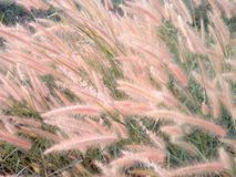 Fields flower grass. Beautiful nature in the morning Royalty Free Stock Image