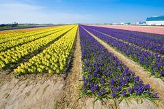 Fields of flowers Stock Photo