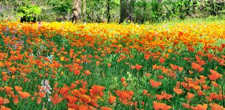 Fields of Flowers Stock Images