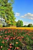 Fields of Flowers Stock Image
