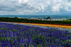Fields of Flowers Hokkaido, Japan July 2015 Stock Photos