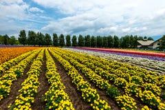 Fields of Flowers Hokkaido, Japan July 2015 Royalty Free Stock Photography