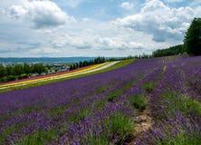 Fields of Flowers Hokkaido, Japan July 2015 Stock Images