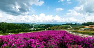 Fields of Flowers Hokkaido, Japan July 2015 Royalty Free Stock Image
