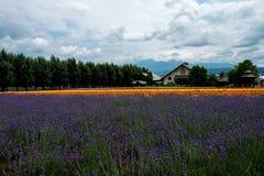 Fields of Flowers Hokkaido, Japan July 2015 Royalty Free Stock Photo