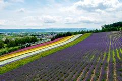 Fields of Flowers Hokkaido, Japan July 2015 Stock Image