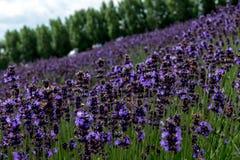 Fields of Flowers Hokkaido, Japan July 2015 Stock Photo