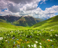 Fields of flowers in the mountains. Stock Photo