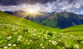 Fields of flowers in the mountains Royalty Free Stock Photos