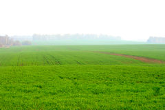 Fields and fog Royalty Free Stock Images