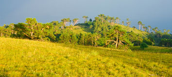 Fields and forests. Bright sunset forest in summer Royalty Free Stock Image