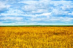 Fields, Forests, Clouds, Nature and Relaxing. Beautiful summer field with a high yellow grass Stock Photography