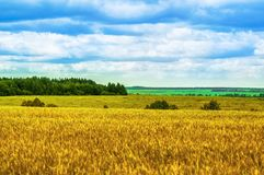Fields, Forests, Clouds, Nature and Relaxing. Beautiful summer field with a high yellow grass Stock Photo