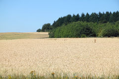 Fields and forests Royalty Free Stock Photography