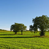Fields in France Stock Image