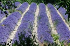 fields france lavendel provence Royaltyfria Bilder