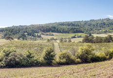 Fields of france with vineyard. And mountains in the Pyrenees in the background on a sunny day royalty free stock photos