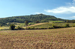 Fields of france with vineyard. And mountains in the Pyrenees in the background on a sunny day royalty free stock images