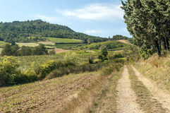 Fields of france with vineyard. And mountains in the Pyrenees in the background on a sunny day. You can see a rural road in one side Royalty Free Stock Images