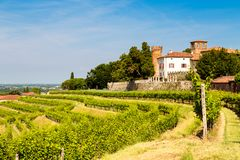 The fields of Friuli Venezia-Giulia cultivated with grapevines. The vineyards of Buttrio in a summer day. Collio Friulano, Udine Province, Friuli Venezia-Giulia stock images