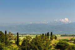 The fields of Friuli Venezia-Giulia cultivated with grapevines. The vineyards of Buttrio in a summer day. Collio Friulano, Udine Province, Friuli Venezia-Giulia royalty free stock images