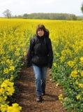 fields gå yellow för ladyrapeseed Royaltyfri Foto