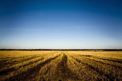 Fields of gold Royalty Free Stock Photography