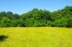 Fields Of Gold. Beautiful circular field of yellow color surrounded by the density of the green forest royalty free stock photo