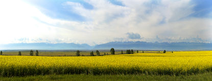 Fields of gold. The distant peaks of the Tianshan Stock Photo