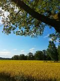 Fields of gold. Open landscape view Royalty Free Stock Image