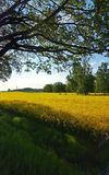 Fields of gold. Open landscape view Stock Photo