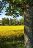 Fields of gold. Open landscape view Stock Images