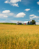 Fields of Gold Stock Photos