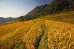 Fields of Golds Royalty Free Stock Images