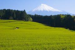 fields grön tea vi fotografering för bildbyråer