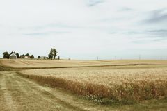 Fields of Grain Stock Photography