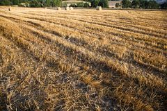 Fields grain with bales Royalty Free Stock Images