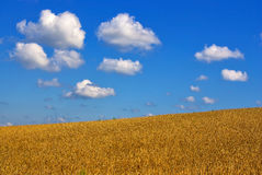 Fields Of Grain Under Cloudy Blue Sky Stock Photography