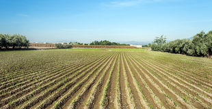 Fields of Granada Stock Images