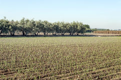 Fields of Granada Royalty Free Stock Photography