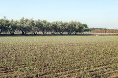 Fields of Granada Royalty Free Stock Photography