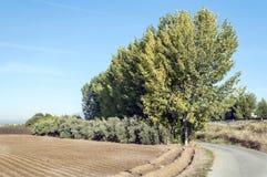 Fields of Granada Royalty Free Stock Image