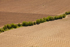 Fields with grapevine Royalty Free Stock Photography