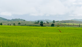 Fields of green Royalty Free Stock Photography