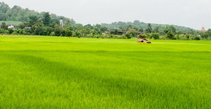 Fields of green Royalty Free Stock Image