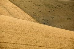 Fields of growing grain on rolling hills of Abruzzo. Italy stock photography