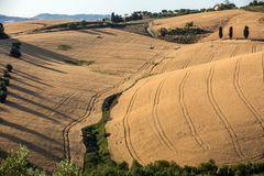 Fields of growing grain on rolling hills of Abruzzo. Italy royalty free stock photography